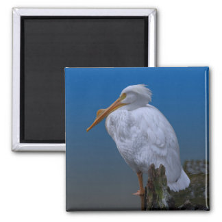 White Pelican at the Water Magnet