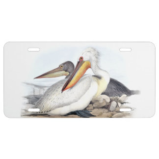 White Pelican Birds Beach Wildlife License Plate