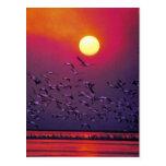 White Pelican in Haze Postcard