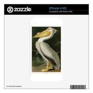 White Pelican John James Audubon Birds of America iPhone 4 Decal