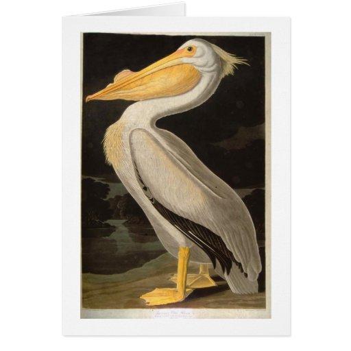 White Pelican, John James Audubon Greeting Card