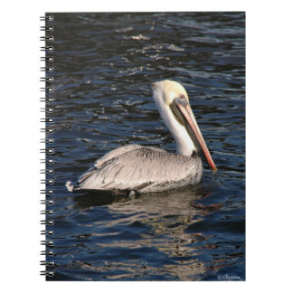 White Pelican Notebook