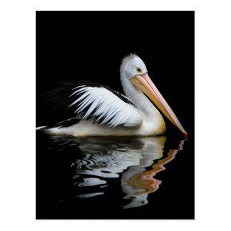 White pelican postcard