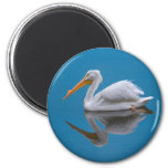 White Pelican Reflection Magnet