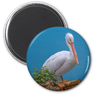 White Pelican Standing Magnet