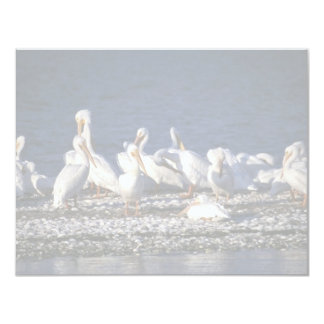 White Pelicans 4.25x5.5 Paper Invitation Card