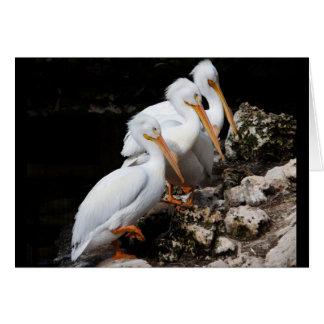 White Pelicans Card