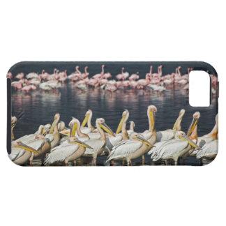 White Pelicans, Pelecanus onocrotalus, Lake iPhone SE/5/5s Case