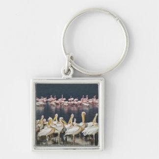 White Pelicans, Pelecanus onocrotalus, Lake Silver-Colored Square Keychain
