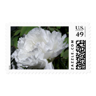 White Peony 4 Floral Photography - Wedding Postage