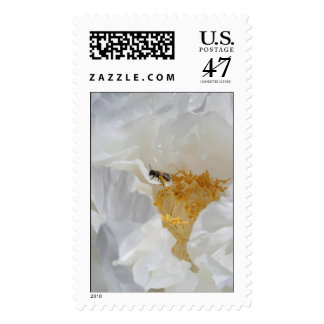 White Peony and Bee - floral Photography - Stamps