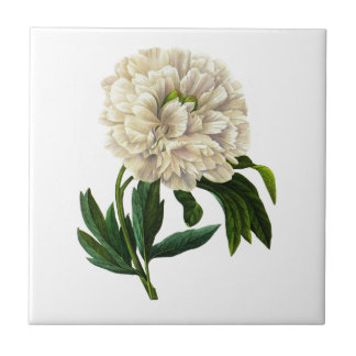White Peony By Pierre Joseph Redoute Ceramic Tile