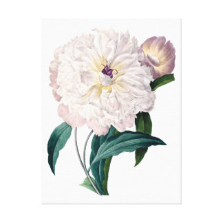 White peony canvas by Redoute Canvas Print