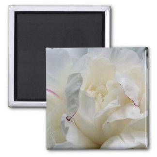 White Peony Close Up Flower Photo Magnet