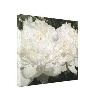 White Peony Flowers Canvas Print