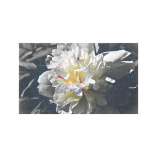 white peony gallery wrapped canvas