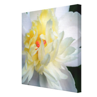White Peony on Canvas Canvas Print