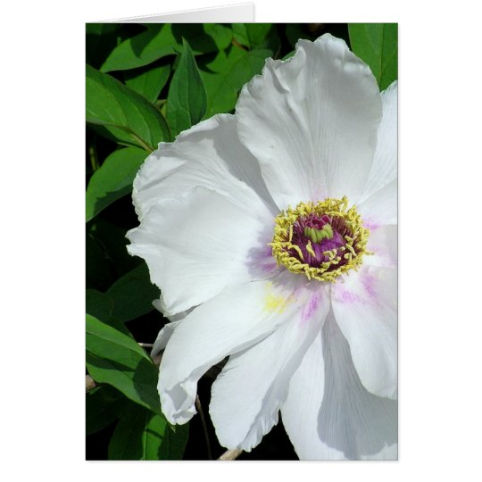 White Peony (photog) Greeting Card, Blank Inside Card