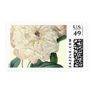 White Peony | Postage