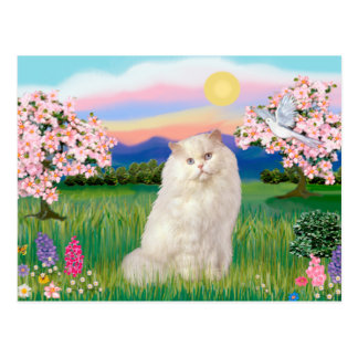 White Persian Cat - Blossoms Post Cards