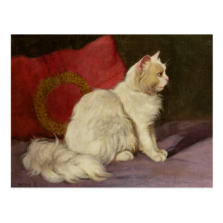 White Persian Cat Postcard
