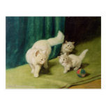 White Persian Cat with Two Kittens Postcard