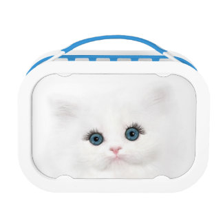 White persian kitten face lunch box