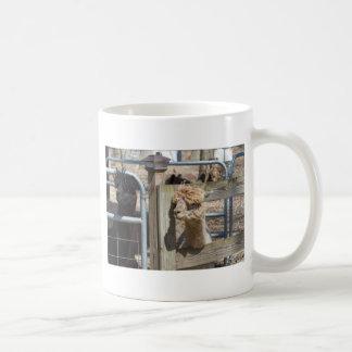 White Peruvian Alpaca - Vicugna pacos Coffee Mug