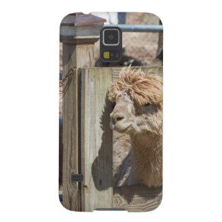 White Peruvian Alpaca - Vicugna pacos Galaxy S5 Cover