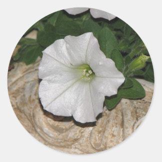 White Petunia Classic Round Sticker
