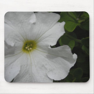 White Petunia Flower Mouse Pad