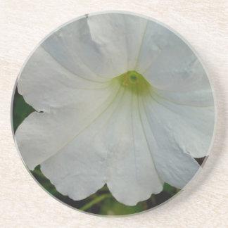 White Petunias Flower Coaster