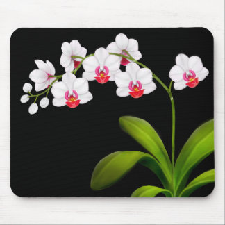 White Phalaenopsis Orchid Flowers Mousepad