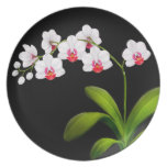 White Phalaenopsis Orchid Flowers Plate