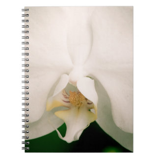White Phalaenopsis Orchid Spiral Notebook