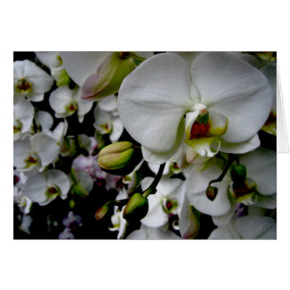 White Phalaenopsis Orchid Notecard Stationery Note Card