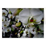 White Phalaenopsis Orchid Notecard Cards