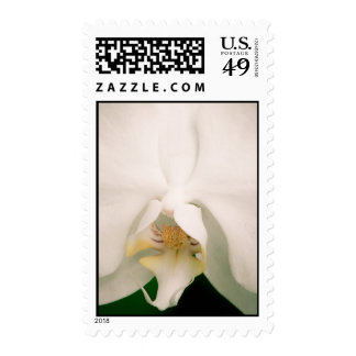 White Phalaenopsis Orchid Postage Stamp