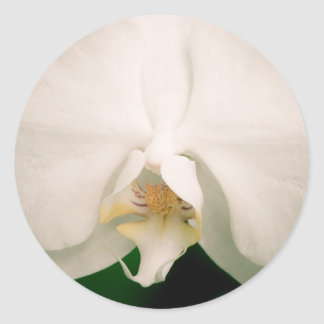 White Phalaenopsis Orchid Stickers