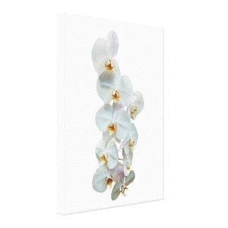 White Phalaenopsis Orchids Canvas Print