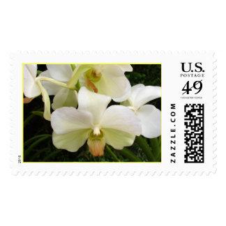 White Phalaenopsis Stamps