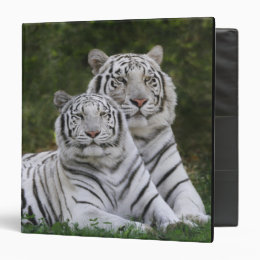 White phase, Bengal Tiger, Tigris 3 Ring Binder