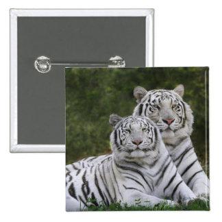 White phase, Bengal Tiger, Tigris Button