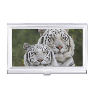 White phase, Bengal Tiger, Tigris Case For Business Cards