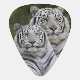 White phase, Bengal Tiger, Tigris Guitar Pick