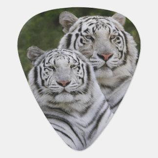 White phase, Bengal Tiger, Tigris Guitar Pick