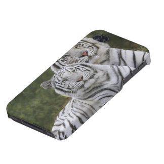 White phase, Bengal Tiger, Tigris iPhone 4/4S Cases
