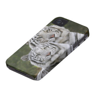 White phase, Bengal Tiger, Tigris iPhone 4 Cover