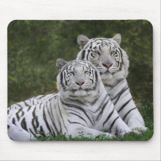 White phase, Bengal Tiger, Tigris Mouse Pad