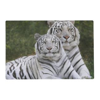 White phase, Bengal Tiger, Tigris Laminated Place Mat